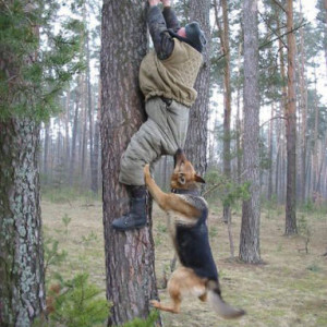 funny-russian-dogs-and-cats-01