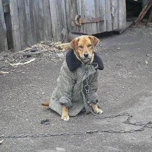 funny-russian-dogs-and-cats-02