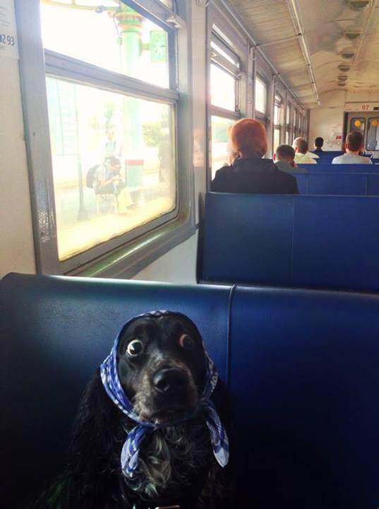 babushka dog in Russian train