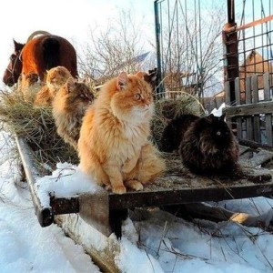 funny-russian-dogs-and-cats
